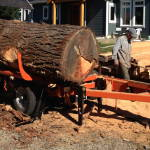 Big fir