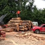 Big log pile