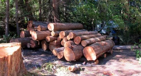 Log-Pile-Photo-01