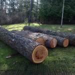 log prep 3