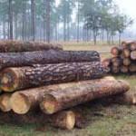 logs_ready_to_saw